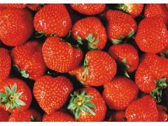迟家久久秸秆牛奶草莓 农家堆肥