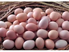 散养土鸡蛋 绿色健康产品 一箱10