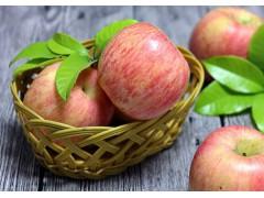 红富士苹果 印字的8元/1斤 散卖