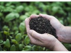 厂家批发绿色有机肥 葡萄专用有