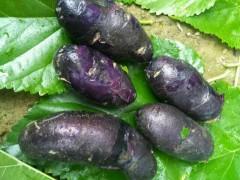 紫色马铃薯