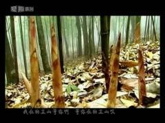 贵州桐梓狮溪鲜方竹笋