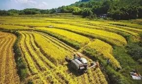 刘奇:带动小农户进入现代农业,需政府、市场、社会共发力